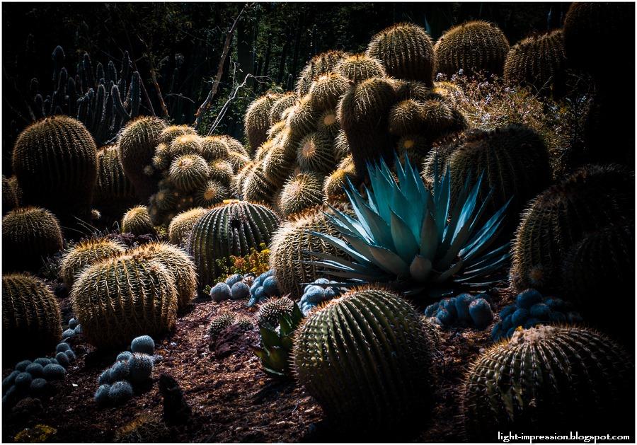 Light Impressions-Cacti Garden