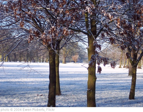 'Frozen Trees on the Golf course' photo (c) 2004, Ewen Roberts - license: http://creativecommons.org/licenses/by/2.0/