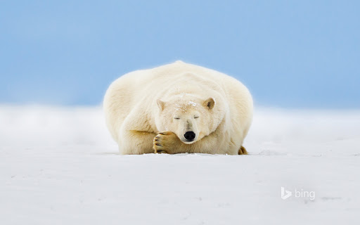 Polar Bear on a Barrier Island