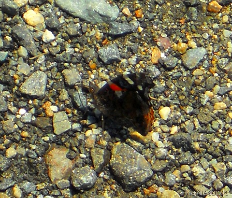 12. butterfly in parking lot-kab