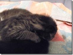 kittens 1 week 04