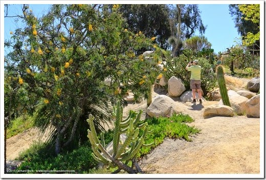 150324_SanDiego_BalboaPark_DesertGarden_044