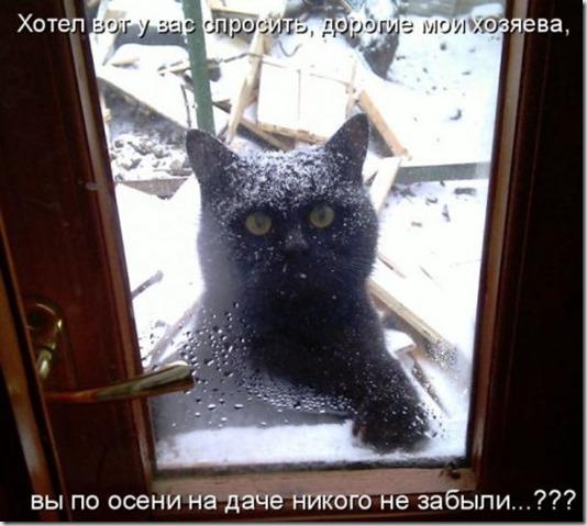 1302214947_kotomatritsa-6