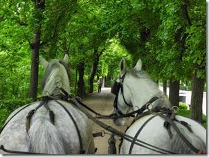 Vienna horseride_edited-1