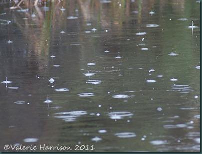 14-rain