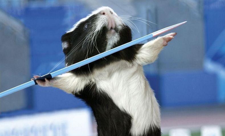 guinea-pig-games-0