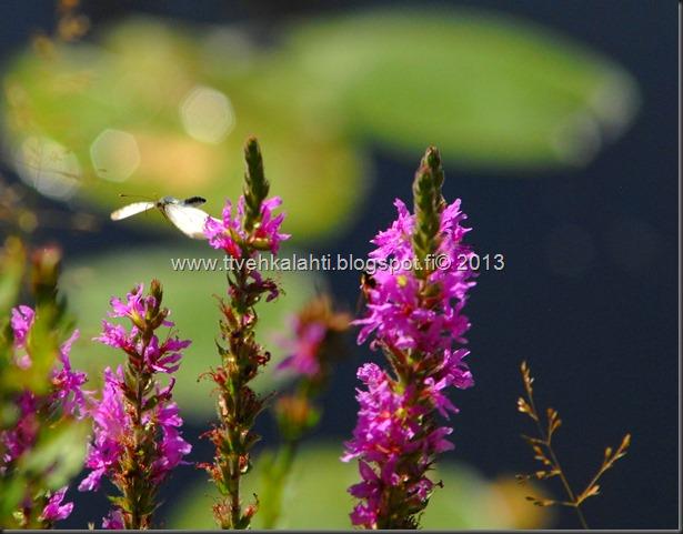 perhosia 107