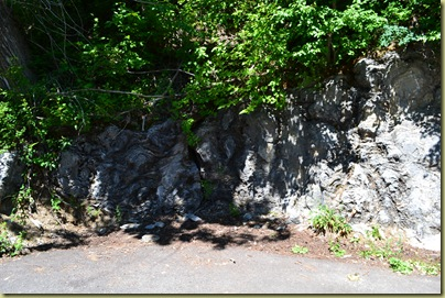 Fossilised Strombolites