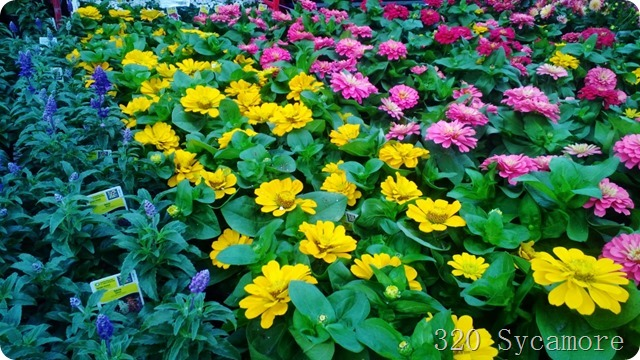 flowers lowes