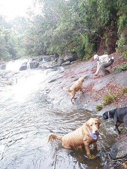 Dogs Trekking 4 (306)