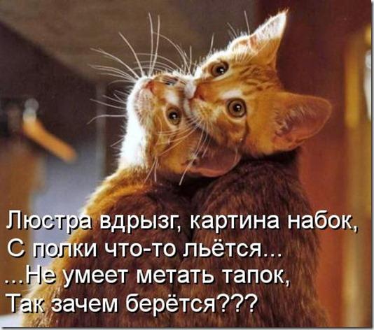 89305578_kotomatritsa_DC