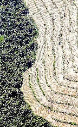 Aerial view of deforestation in the Amazon rainforest to clear space for beef and soybeans. Photo: Reuters