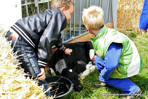 koeien kijken boer martij 18-06-2011 (27).JPG