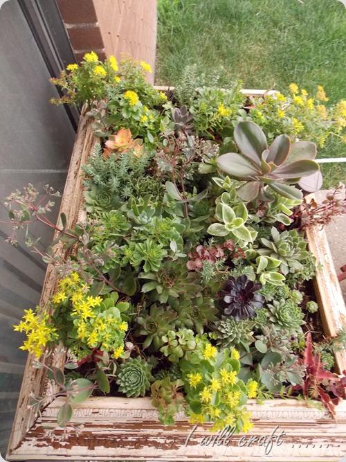 Plants 002