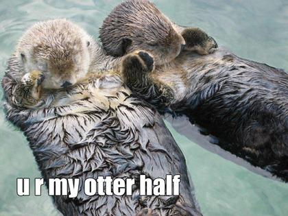 my-otter-half