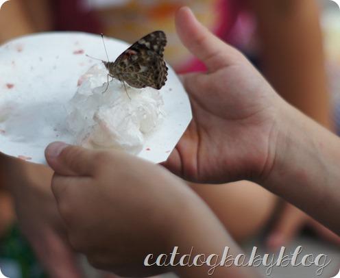 2013-09-11 butterfly (28)