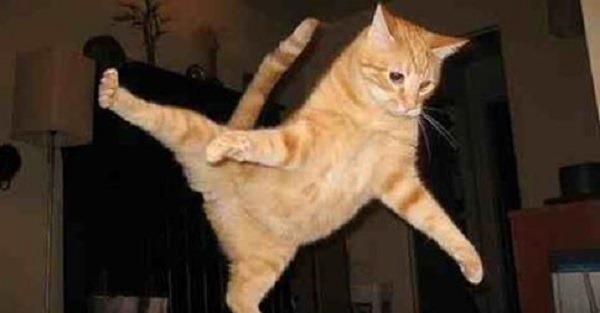 Alguns gato não sabem pular