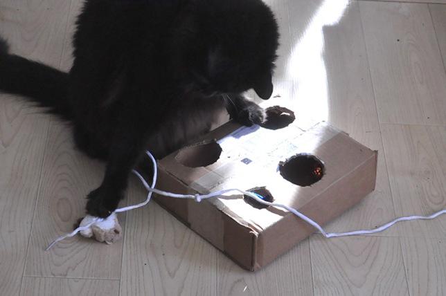cat_toy