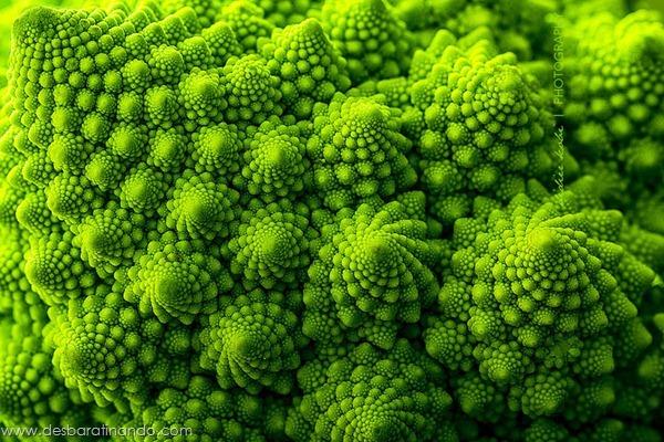 natureze-nature-padrao-pattern-desbaratinando (7)