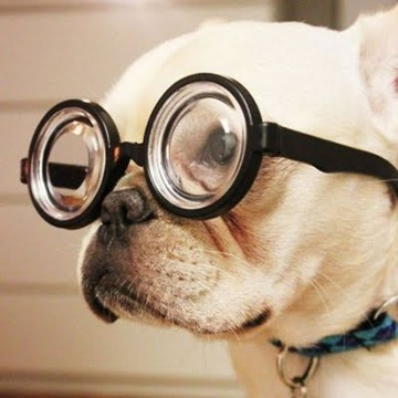 DOG_GLASSES
