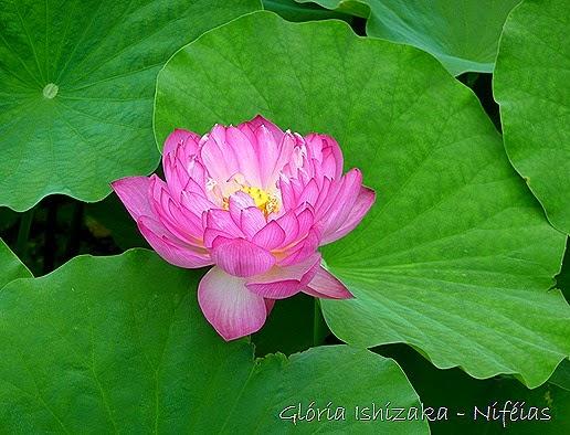 Glória Ishizaka - flores 71