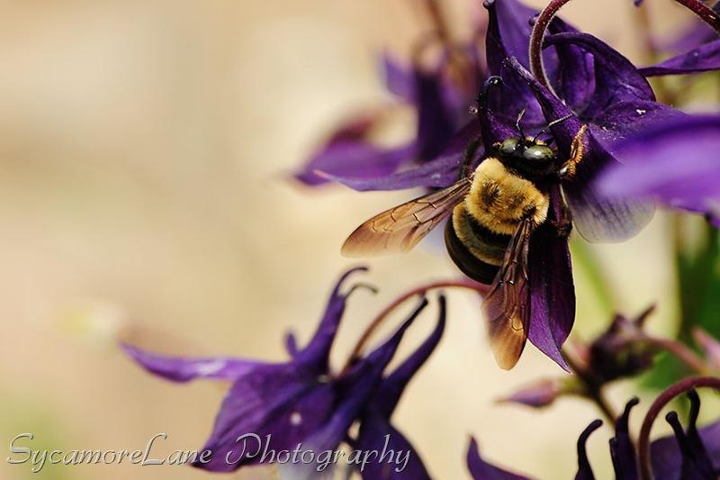 bumble bee-w