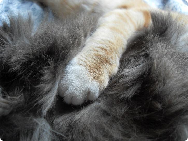 katte på besøg - juni 2013
