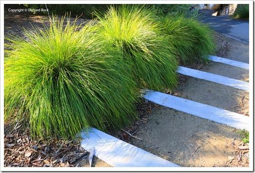 131124_UCD_Arboretum_AustralianCollection_96