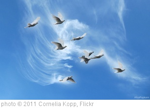 'peace doves' photo (c) 2011, Cornelia Kopp - license: http://creativecommons.org/licenses/by-nd/2.0/