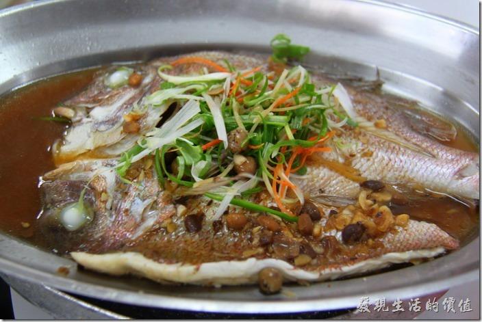 台東富岡漁港活海產。清蒸加納魚,NT$430。老實說這魚料理得蠻好的,不過魚肉本身有點粗及硬,也就是不夠細緻,不建議用清蒸的。