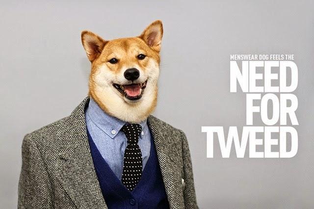 El perro modelo más famoso de Internet