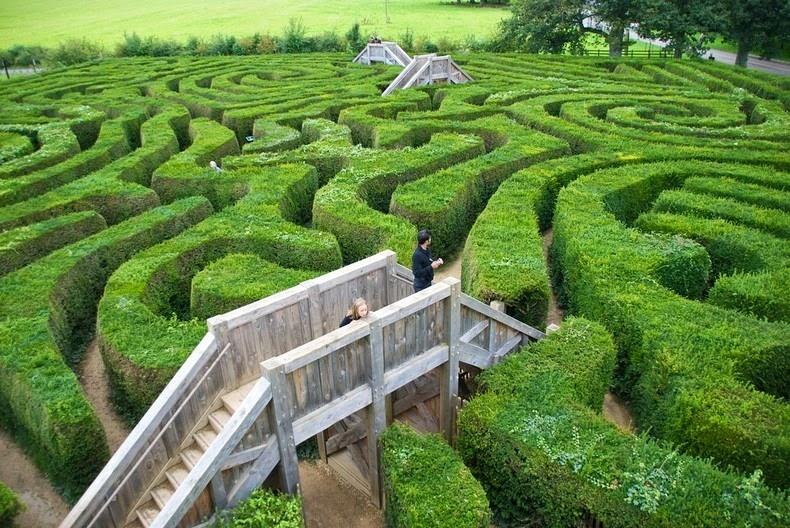 longleat-hedge-maze-3