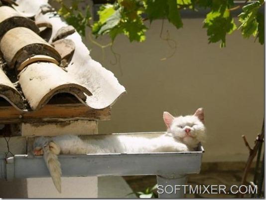 slp_cats_5