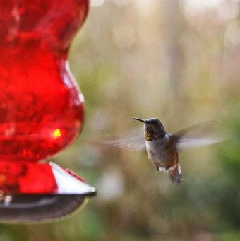 Humbybirds 022-2