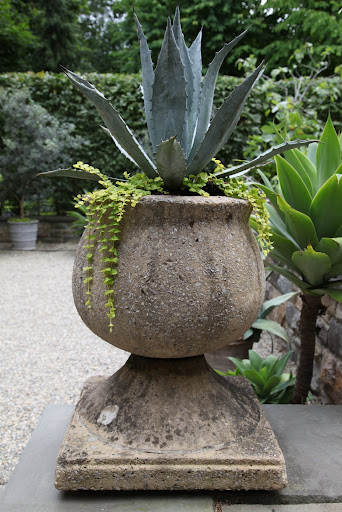 This includes palms, cycads, and succulents like agaves and cacti.  Each are planted in majestic stone pots.