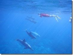 ハワイでイルカと一緒に泳ぐ