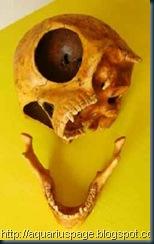 cranio extraterrestre