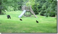 family o bears at the playground