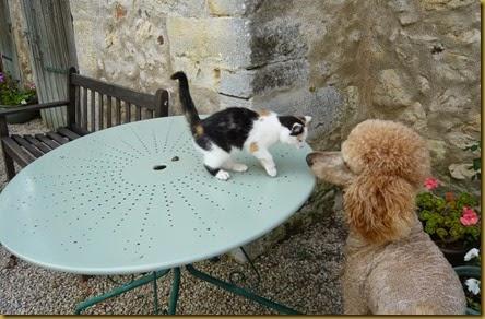 Lulu meets Daisy4
