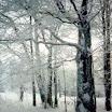Pierwsza Chata - Zima 1999