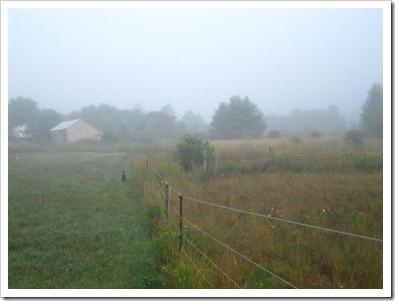 20120802_morning-mist_008