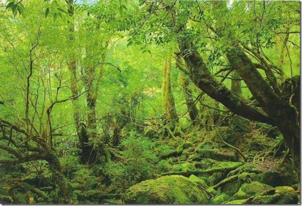floresta no japão (12)