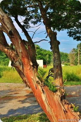 July 12 tree