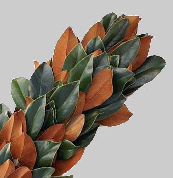 Magnolia-Garland