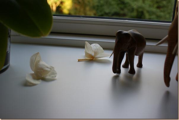 en træt blomst