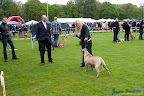 20100513-Bullmastiff-Clubmatch_30922.jpg