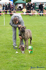 20100513-Bullmastiff-Clubmatch_31116.jpg