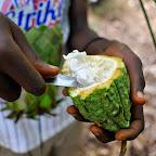 Kaum zu glauben, dass daraus einmal Schokolade wird. Eine geöffnete Kakaoschote. © Foto: Marco Penzel | Outback Africa Erlebnisreisen