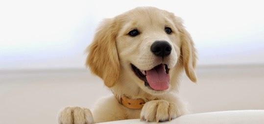 cute-smiling-puppy-full-hd-wallpaper-1080p