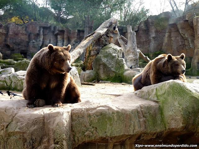 osos-pardos-zoo-de-madrid.JPG